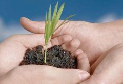 MANI TERRA Forstater Economia Ecologica 4
